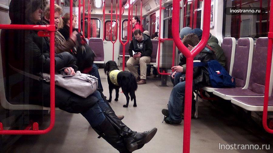 Собака в метро в Праге