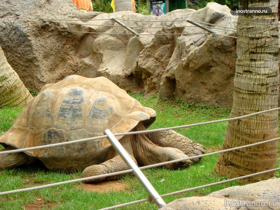 черепаха в лоро-парке