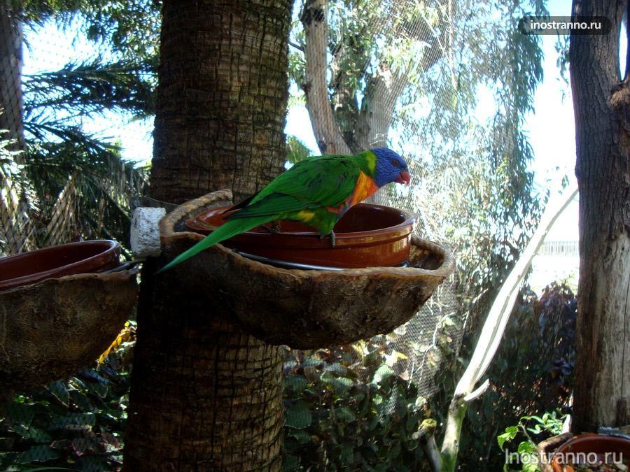 волнистый попугай в лоро-парке