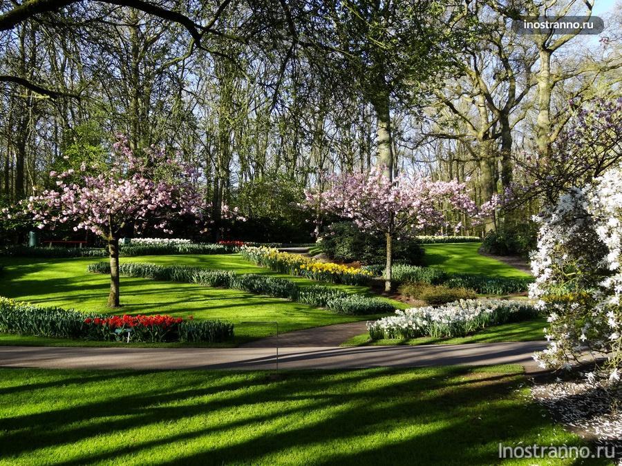 сад кекенхоф рядом с амстердом