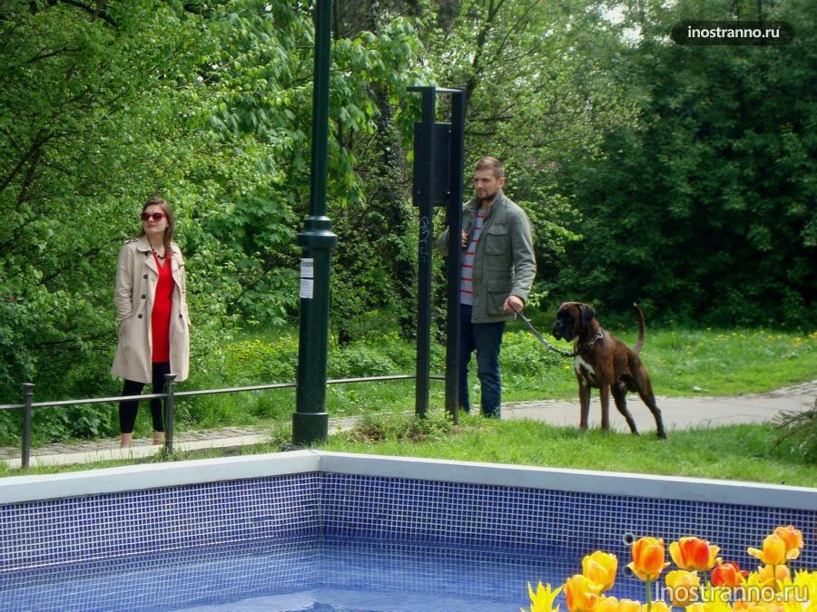 собака в чешском саду