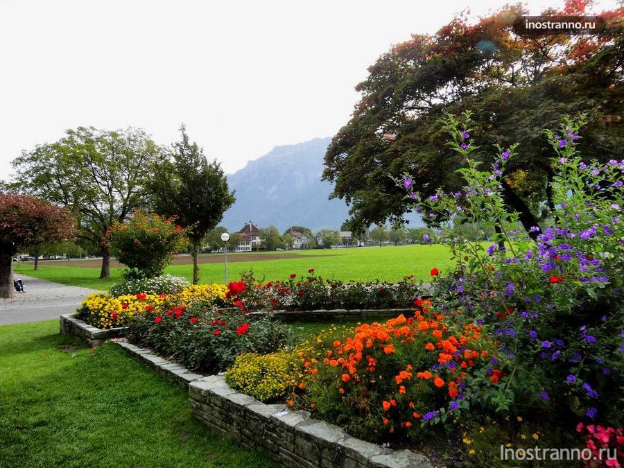 цветы в городе Интерлакен