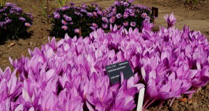 Ботанический сад и выставка тыкв
