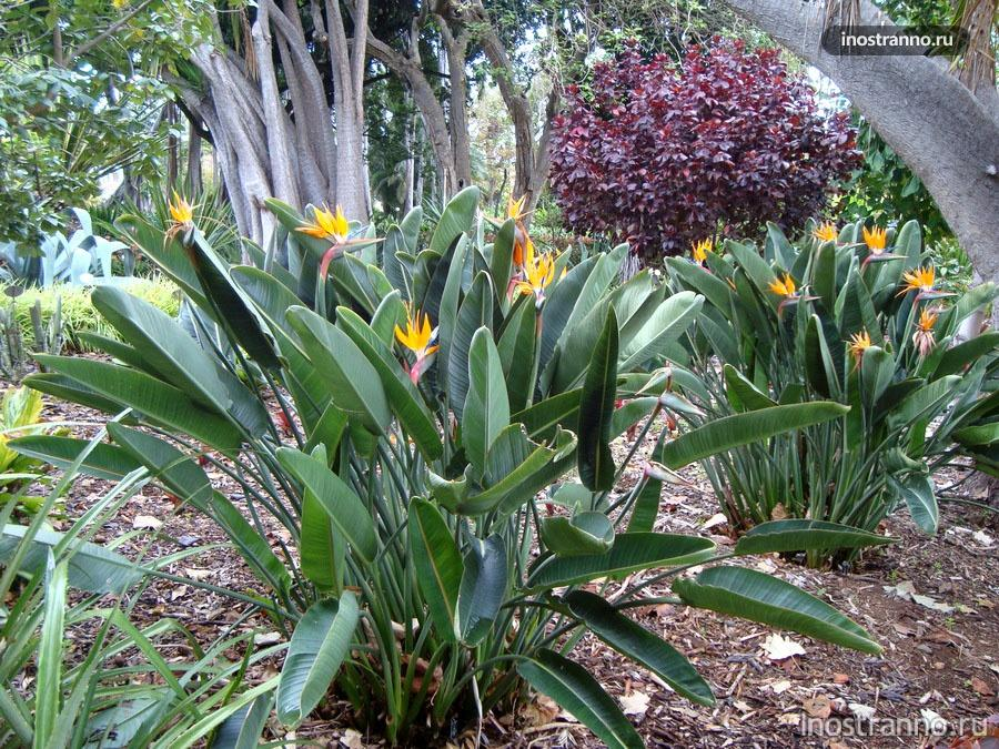 ботанический сад - канарские острова
