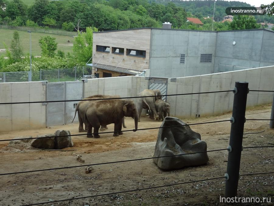 Слоны - Пражский зоопарк