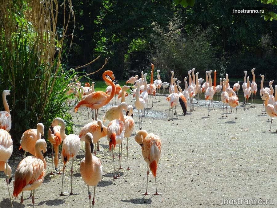 зоопарк в Праге - фламинго