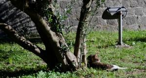Кошки в Которе