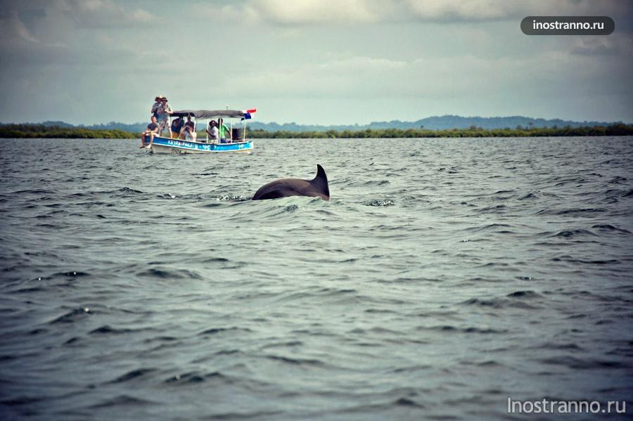 дельфины бокас-дель-торо панама