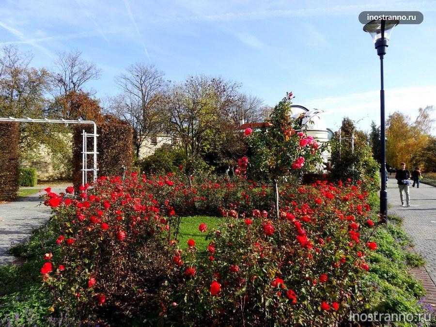 розы в саду Петршин - Прага