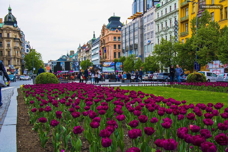 Вацлавская площадь в Праге и тюльпаны