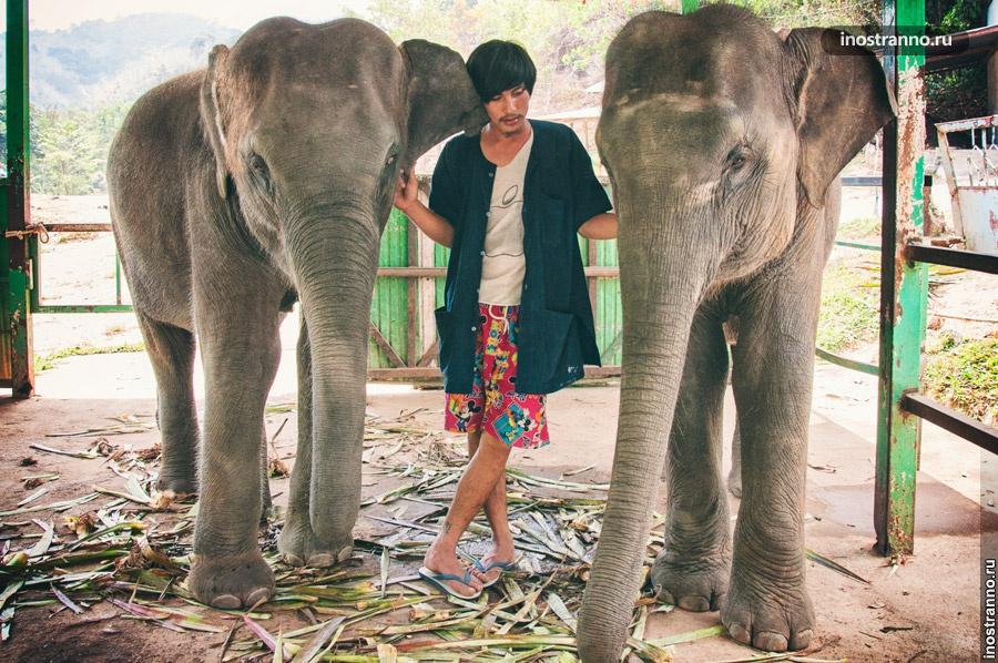 слоновья деревня пхукет