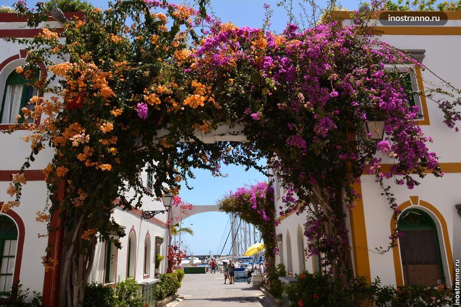 цветы на улочка Гран Канария