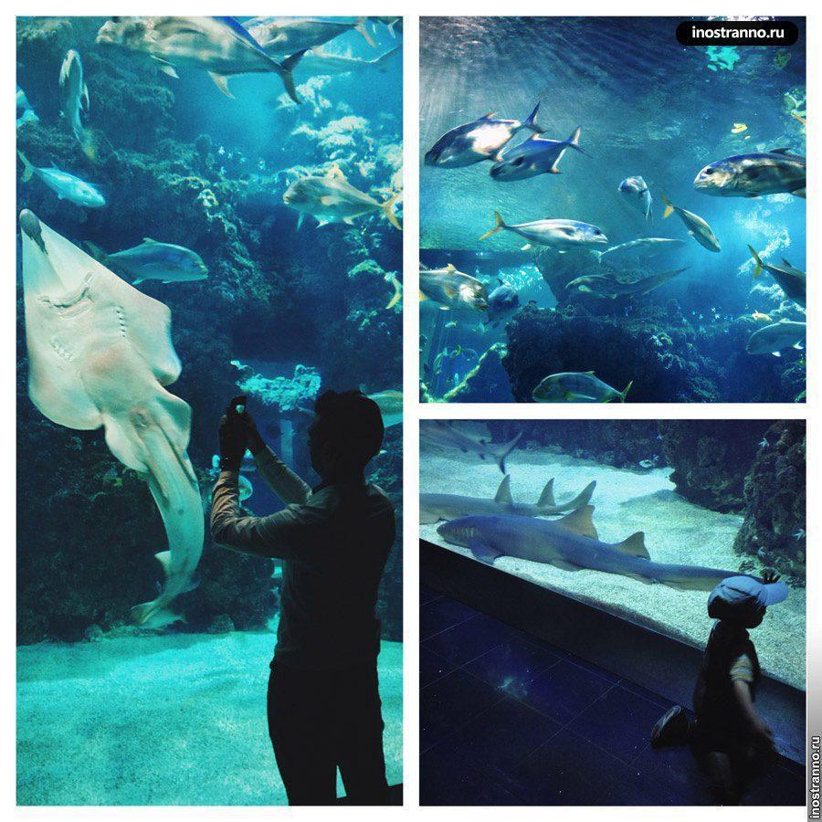 океанографический музей монако