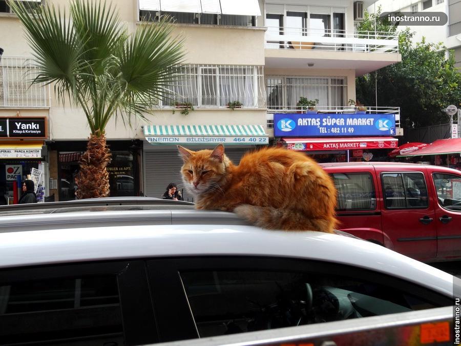 Кот из Измира