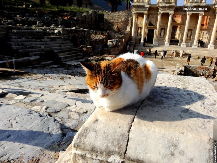 Скромный рыжий кот