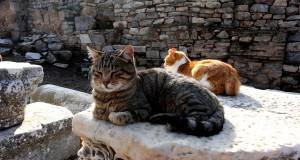 Кошки Турции