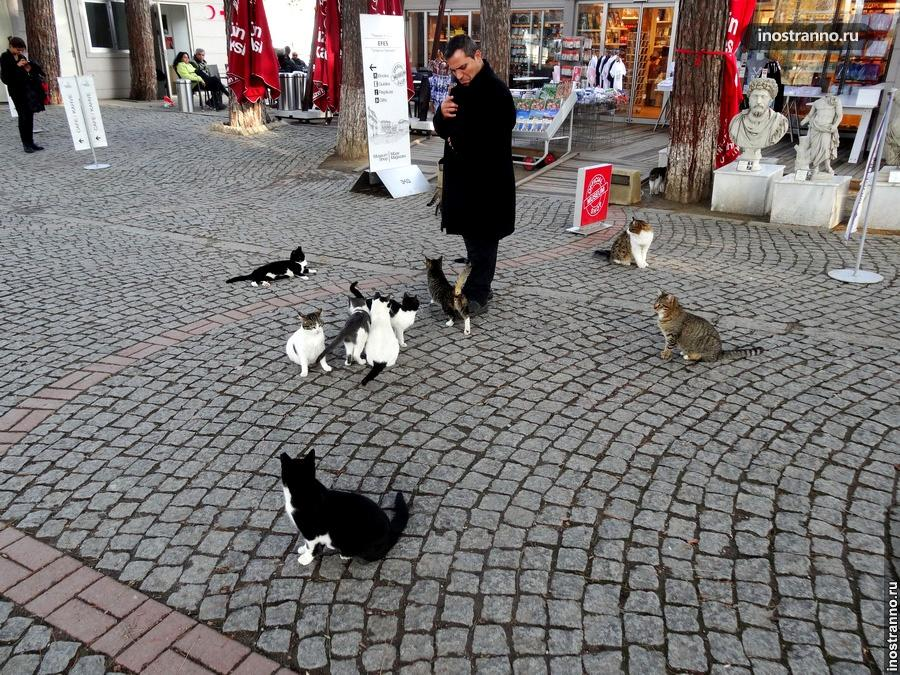 Эфес и кошки