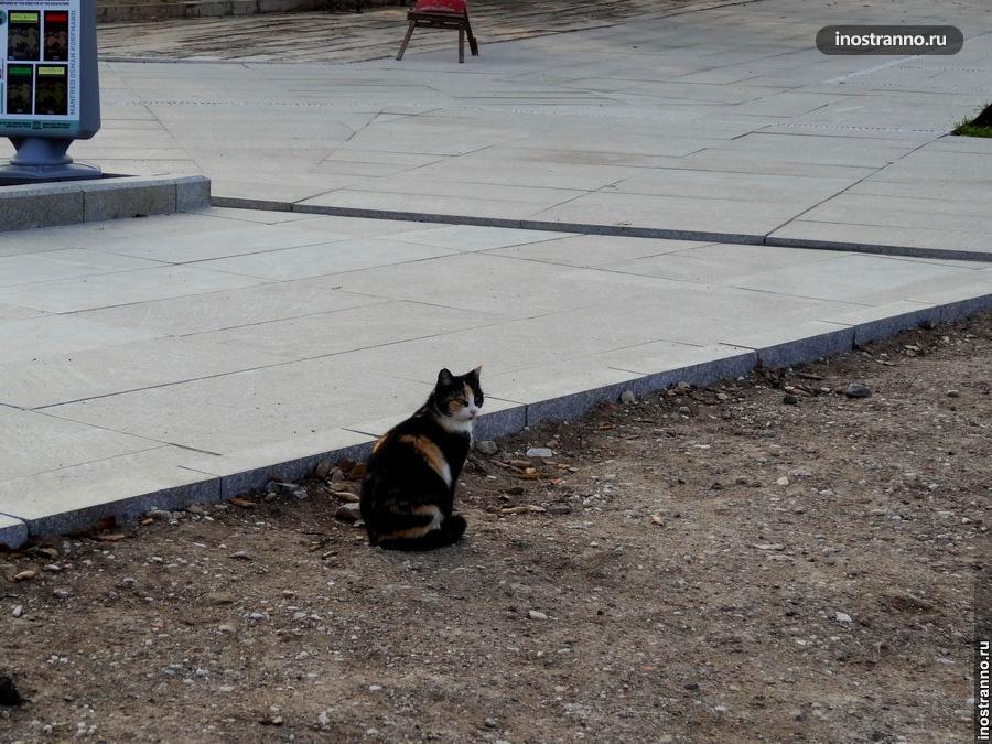 Турецкий кот