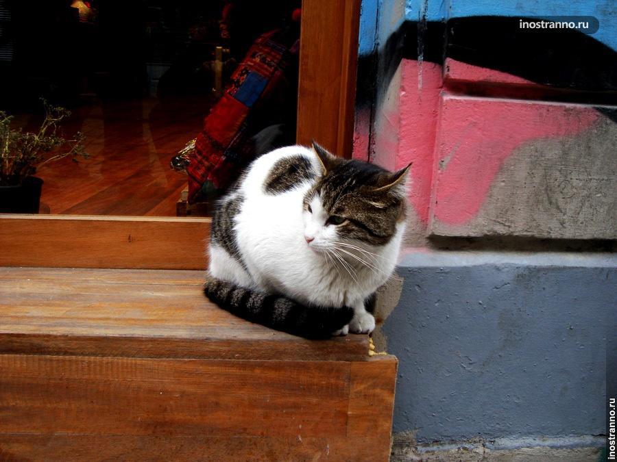 Кошки Стамбула