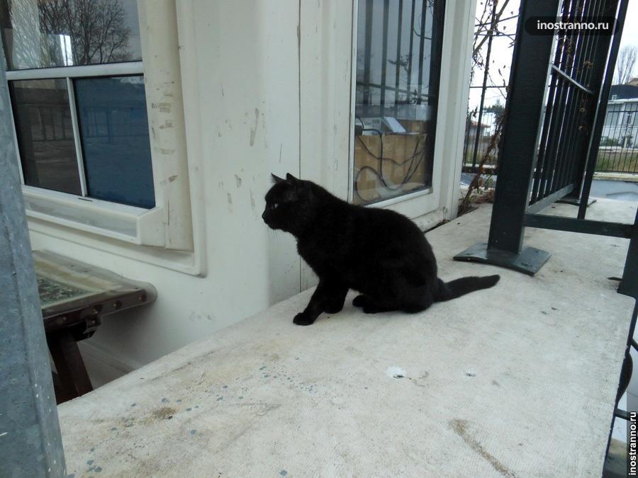 ласковый кот из Стамбула