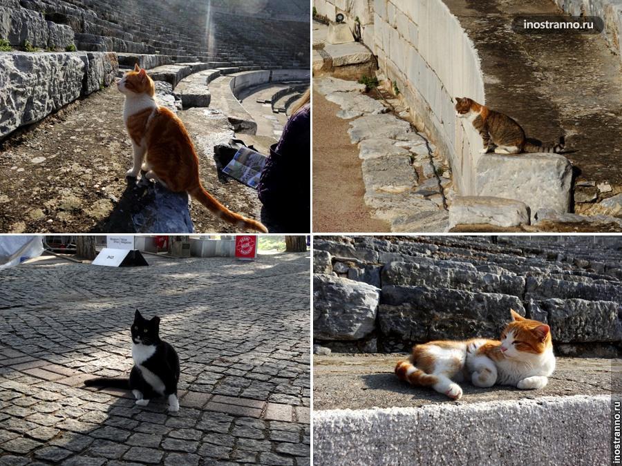 Коты Турции