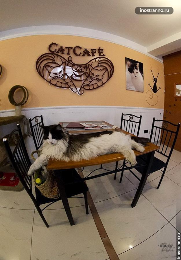 кафе с кошками будапешт