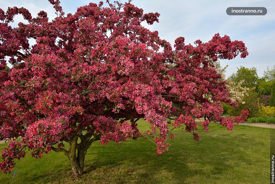 Парки Праги весной