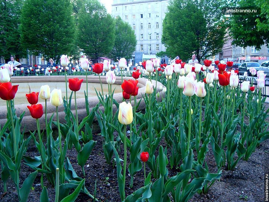 Тюльпаны в саду Праги
