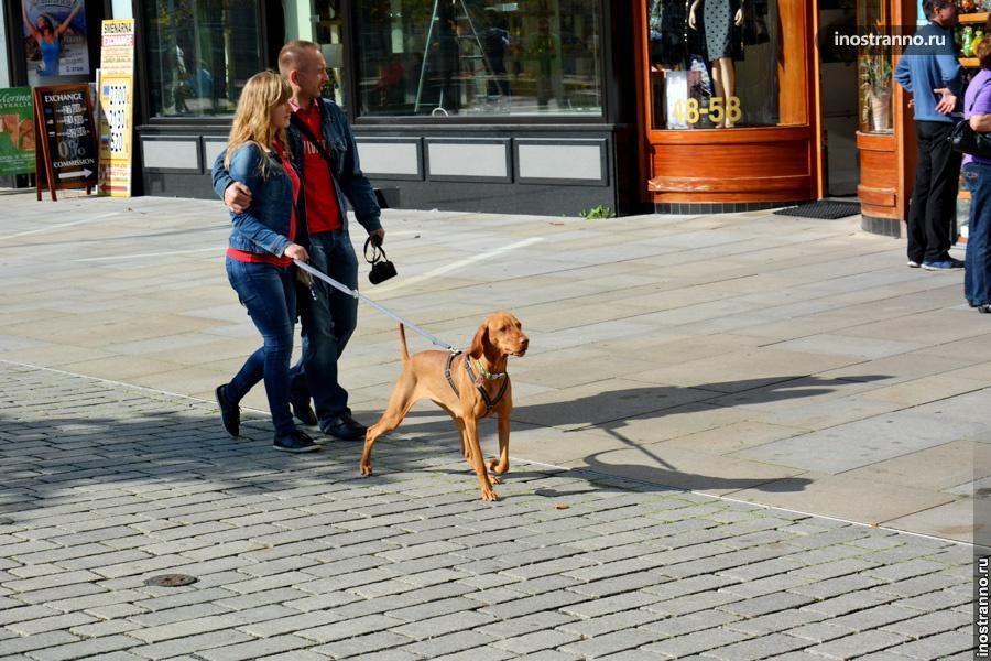 Собаки в Чехии