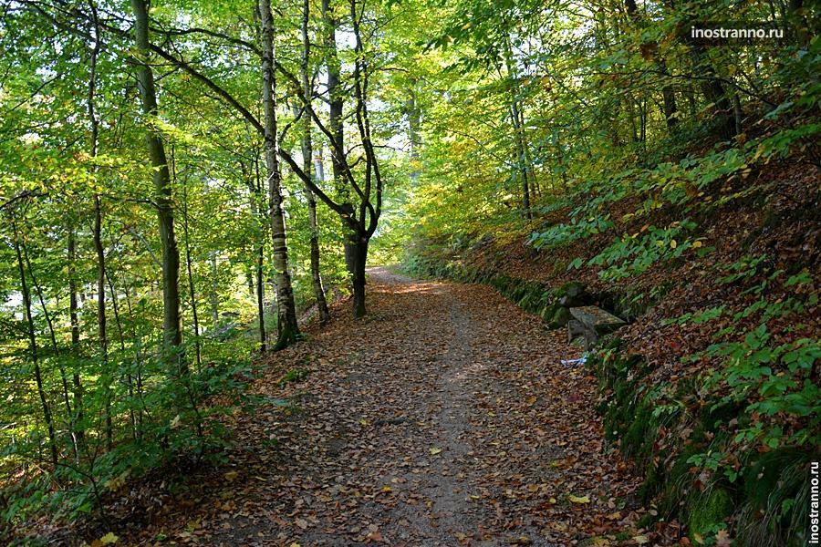 Осенний лес в Чехии