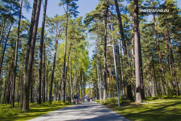 Лес у Балтийского моря