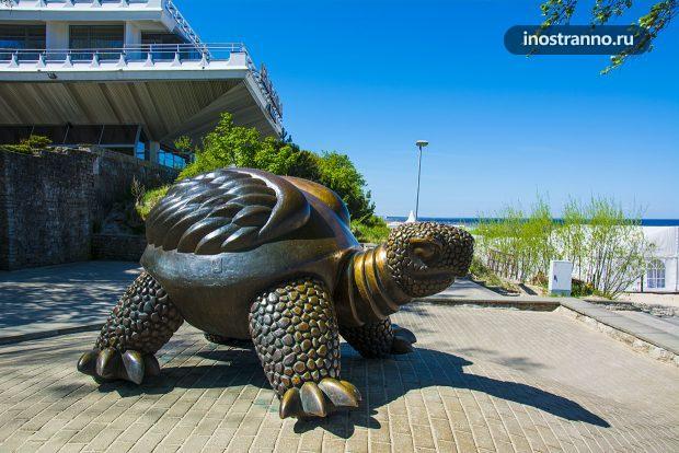 Черепаха в Юрмале