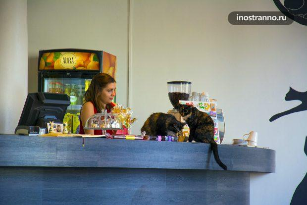 Котокафе в Таллине