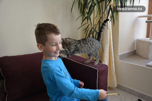 Кот играет с ребенком