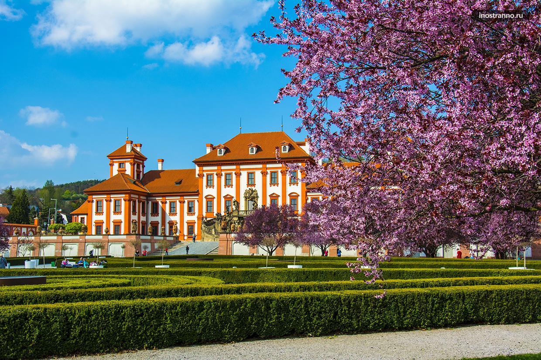 Весна в Праге, цветение сакуры