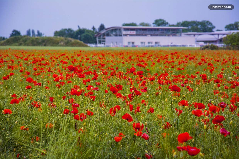 Маковое поле в Чехии