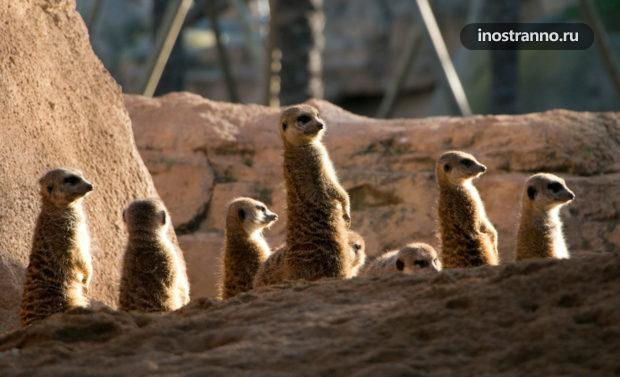 Биопарк зоопарк Валенсии