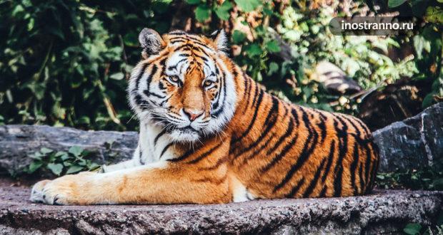 Лучшие зоопарки Европы — Топ 10