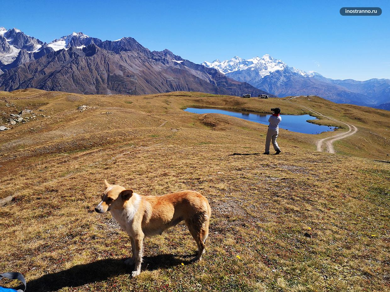 Собака в горах