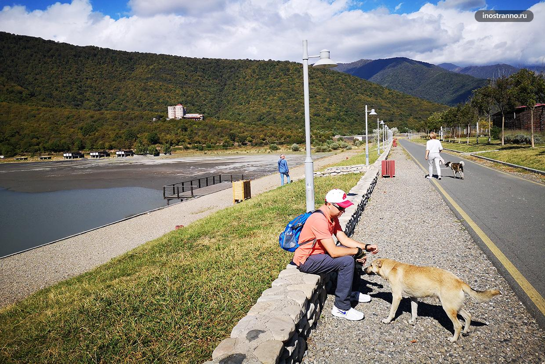 Собаки в Грузии