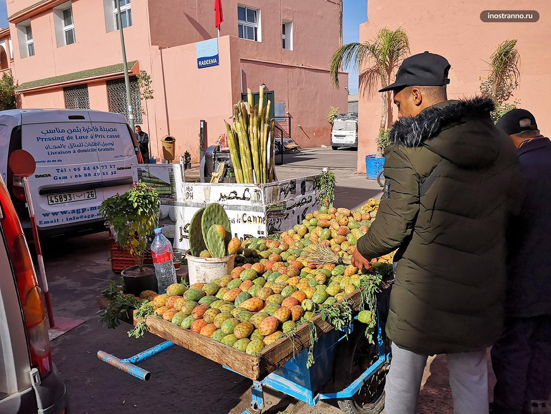 Кактусы в Марокко