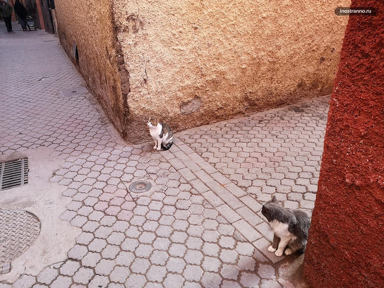 Коты в Марракеше