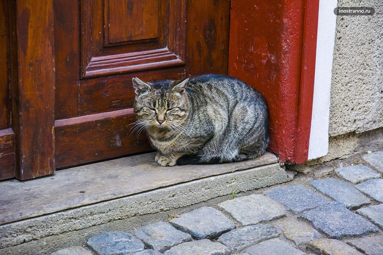 Ленивый кот