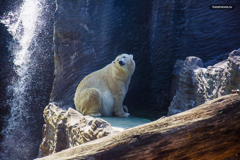 Белый медведь в зоопарке