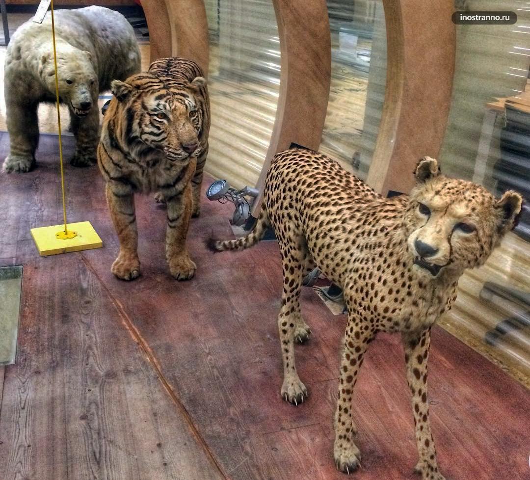 Музей Зоологии в Болонье