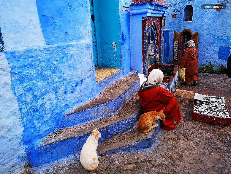 Марокканские коты