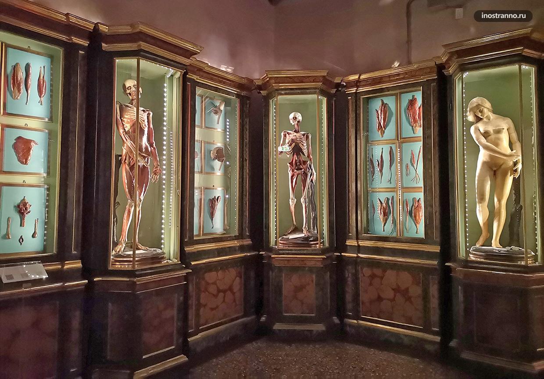 Музей при старейшем университете Болоньи во дворце Поджи