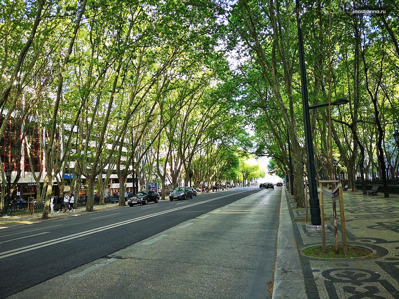 Авеню с деревьями в Лиссабоне