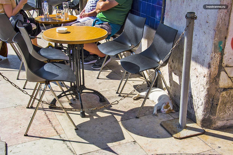 Кот в Лиссабоне