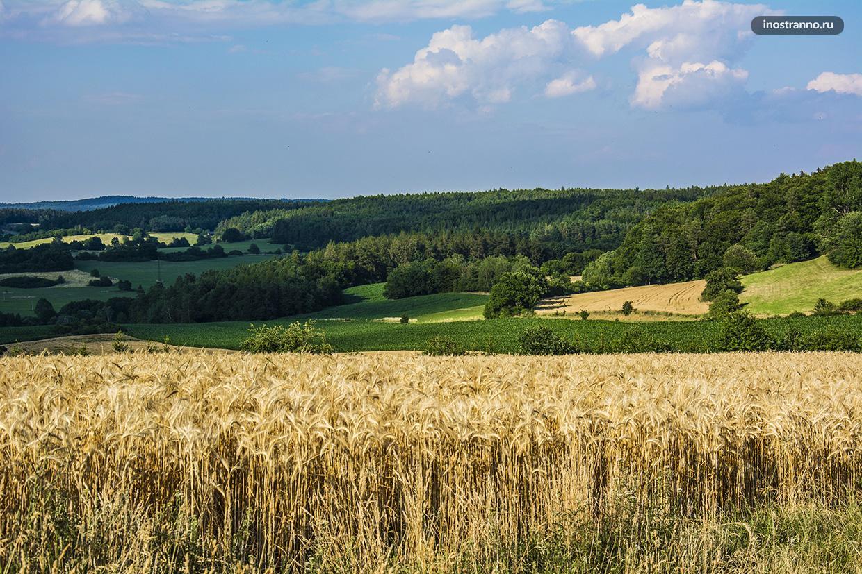 Злаковые поля в Чехии